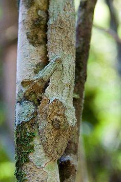 Gecko | Flickr - Photo Sharing!