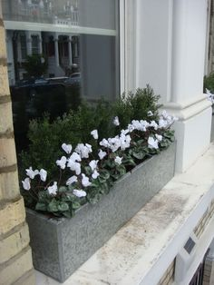 White cyclamen in zinc trough. Fake It with faux flowers for.- White cyclamen in zinc trough. Fake It with faux flowers for year round interest… White cyclamen in zinc trough. Fake It with faux flowers for year round interest and zero maintenance. Window Box Flowers, Balcony Flowers, Fake Flowers, Artificial Flowers, Winter Container Gardening, Container Plants, Succulent Containers, Container Flowers, Vegetable Gardening