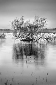 mono,monochrome,black and white, water ,tree,forest,reflection,sunset, sunrise,lake, ,mountain,water,sky,clouds,horizontal, colorful, outdoors, nature, landscape,reflections,exterior, europe, photography, landscapes, spain, granada,spring,