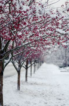 ** winter's red