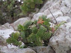 Aloe squarrosa 2729c Rare Plants, Habitats, Succulents, Corner, Gardening, Plants, Cacti, Lawn And Garden, Succulent Plants