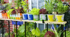 Aviez-vous déjà songé à cultiver des salades en pot pour créer une jardinière décorative ? Jouer sur les couleurs, sur les formes et sur les différents pots pour créer une atmosphère originale ; c'est possible ! Semis, plantation, entretien, récolte... Détente Jardin vous donne ses conseils pour réussir pas à pas ces différentes étapes. Il ne vous restera plus qu'à trouver une petite place sur votre balcon ou votre terrasse pour exposer vos salades en pot !