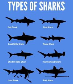 types of sharks funny-stuff