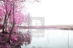"""""""Magical infrared light"""" by nelson garrido silva - Display Advertising, Print Advertising, Light Images, Us Images, Lit Captions, Magical Tree, Retail Merchandising, Landscape Background"""