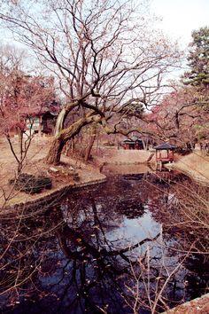 Secret garden: Seoul (Tuula)
