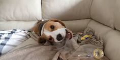 You can throw all the tennis balls you want, but what Louie The Beagle really wants is his plastic bottle.