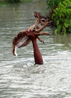 Brave Boy Risks Own Life to Save a Baby Deer from Drowning