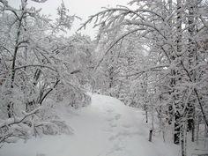 Oberholtzer Trail-voyageur's National Park
