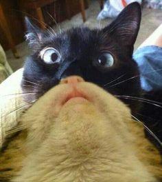 Cat bearding cat!!