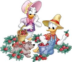 Donald @ Dasiy | Donald And Daisy Duck...