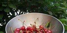 Višňová griotka - Tinkine recepty Wok, Serving Bowls, Tableware, Kitchen, Mixing Bowls, Cooking, Dinnerware, Bowls, Dishes