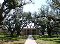 Oak Alley Plantation, LA ~ looking towards the house