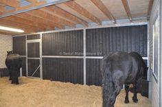 inloopstal Horses, Animals, Animales, Animaux, Animais, Horse, Words, Animal