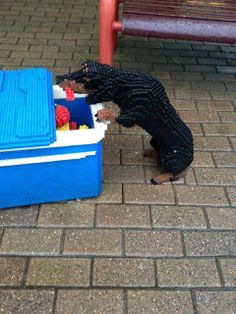 Doxie stealing hot dog 12 Photos of Lego Dogs That Will Make Your Jaw Drop