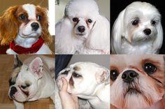 Saiba as causas das manchas de lágrima, como diagnosticar e conheça um tratamento eficaz para que seu cachorro não tenha mais essas manchas.
