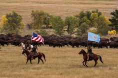 2013 Buffalo Roundup in Custer State Park, South Dakota. Photo by Deborah Eich.
