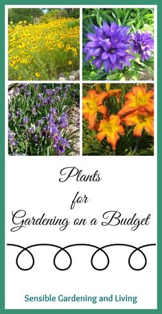 Plants for Gardening on a Budget with Sensible Gardening