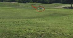 When This Giant Creature Has Crossed The Golf Course, The Players Couldn't Believe Their Eyes!