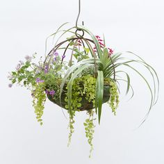 Sphere Hanging Basket in Gardening PLANTERS Outdoor Planters All-Weather at Terrain