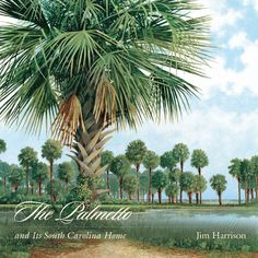 """Read """"The Palmetto and Its South Carolina Home"""" by Jim Harrison available from Rakuten Kobo. With its fanlike evergreen fronds, soft trunk, and strong root system, the palmetto is a wind-adapted palm that can bend. South Carolina Coast, South Carolina Homes, University Of South Carolina, Jim Harrison, Palmetto Tree, Down South, Tree Art, National Parks, Root System"""