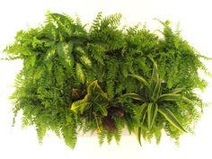 Pereti vegetali Saloane de Frumusete