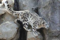 http://www.pinterest.com/backyardwillow/natures-wild-cats/
