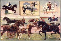 Various Horse Breeds - Curious Clipart - Vintage Clip Art