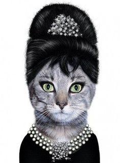 Audrey Hepburn Cat. LOL!!!