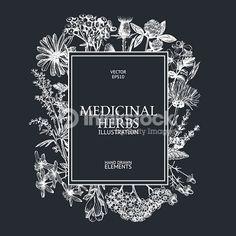 herbs vector - Google Search