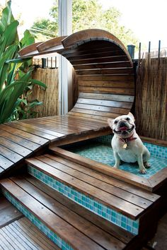Beautiful puppy wading pool!  I so have to do this in our home in costa rica.  how much could this possibly cost?  can't be too much!