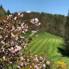 Möchten sie auch die schönen Seiten des Lebens genießen.? 🏌️♂️ Ja, so schön ist Golfen in traumhafter Naturkulisse am KGC Dellach. ⛳️ Foto: Jutta Kleinberger #Golfurlaub #Golfland #Kärnten #Golfplatz #kgc #Dellach #Wörthersee #golf #sport #golfing #golfcourse #golflife #golfer Visit Wörthersee Golf Sport, Golfer, Instagram, Pictures, Backdrops, Nature, Life, Nice Asses