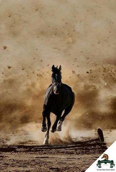 Harika bir hafta diliyoruz! Good morning, Wish you a great week! #Viverde #Hotel #Berke #Ranch #Kemer #Nature #Horse #Discovery #Enjoy #Day #View