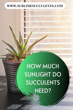 How much sunlight do succulents need? Knowing how much light to provide your succulents and cacti with is an essential part of learning how to correctly care for these unique plants. Check out this pin for more details! Flowering Succulents, Types Of Succulents, Types Of Plants, Cacti And Succulents, Succulent Planter Diy, Succulent Care, Succulent Gardening, Gardening Tips, Container Gardening