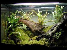 Kingsnakecom Herpforum RE Advicehelp gold dust day Gecko Terrarium, Aquarium Terrarium, Aquarium Setup, Terrarium Plants, Planted Aquarium, Aquarium Fish, Tarantula Enclosure, Reptile Enclosure, Reptile Room