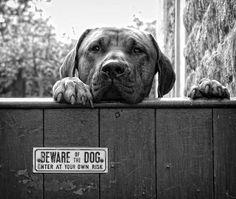 """20+ Very Cute Dogs Behind """"Beware Of Dog"""" Sings"""