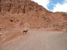 Camino del colorado. Purmamarca, Jujuy, Argentina. Quebrada de Humahuaca.  Siempre hay un perro para acompañarte. PH: Josefina Lorenzo