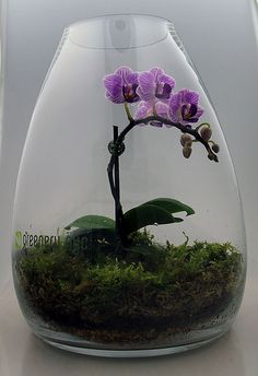 Orchid terrarium - maybe my orchid would like this better than sitting on the kitchen windowsill.