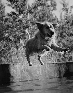 Photos: Photos: Bruce Weber's Dogs! A Canine Portfolio | Vanity Fair