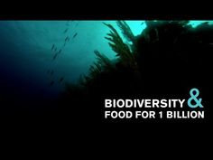 """Great short video. You may also want to learn more about The Perfect Protein at www.theperfectprotein.org. """"Achieving the Unbelievable: Saving the Oceans, and Feeding the World"""""""