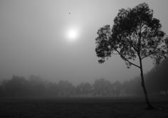 Fog and trees #4