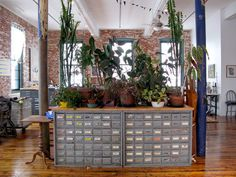 I love old card catalogues (I'm a part-time librarian - what can you do?)!  And so many plants!! I am so tempted, but I know I'd kill them all.