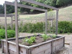 A useful raised vegetable garden design that allows for tying, growing in the open, covering with climbers or adding a protective cover