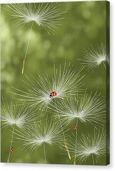 Ladybug Canvas Print by Veronica Minozzi