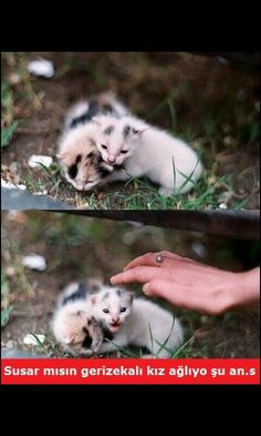 """""""I will always protect you"""" Funy Memes, Comedy Pictures, Unique Small Tattoo, Cat Behavior, Cat Facts, Funny Pins, Kittens Cutest, Funny Images, Haha"""