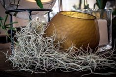 #spanishmoss #candles