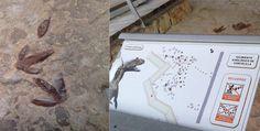 #Alpuente: Dinosaurios en el reino del silencio HISTORIA Y NATURALEZA EN ESTADO PURO! vía @Bio_Valencia
