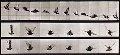 Eadweard Muybridge Animal Locomotion (Plate 755), 1887