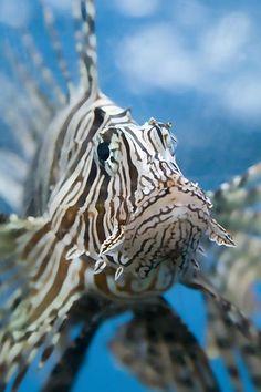 ˚Summer Sea fish Alexandria Egypt