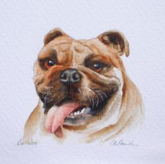 £80 ~ ENGLISH BULLDOG small watercolour painting by TheMinervaGallery