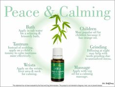 Young Living Essential Oils | Peace and Calming Oil, part of the Premium Kit!